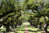 300-Year-Old Oak Trees, Vacherie, New Orleans, Louisiana, USA Fotografie-Druck von Cindy Miller Hopkins