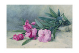 Oleander Blossom Giclee Print by Mary E. Butler