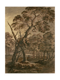 Forest Scene, a Giant Scots Fir and Forest Glade, 1771 Giclee Print by Rev. William Gilpin