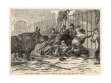 Rescuing the Female Rhinoceros from the Ice Giclee Print by A. Prevost