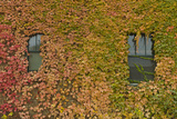 Autumn Ivy, Fargo, North Dakota, USA Photographic Print by Walter Bibikow