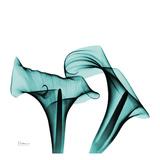 Lírios d'água Arte por Albert Koestsier
