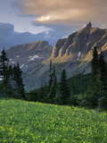 Hanging Gardens, Logan Pass, Glacier National Park, Montana, USA Photographic Print by Charles Gurche