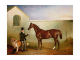 Mr Meakin Holding Sir Robert Peel's Chestnut Hunter with His Dogs 'Hector' and 'Jem', 1853 Giclee Print by John E. Ferneley