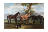 The 6th Duke's Favourite Hunters and Dogs, 1857 Giclee Print by John E. Ferneley