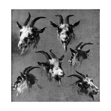 Six Studies of Goat Heads Giclee Print by Nicolaes Pietersz. Berchem