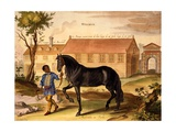 Makomilia, a Turk, Led by a Negro Stable Boy in Livery, from 'The Method and New Invention of… Giclee Print by Abraham Jansz. Van Diepenbeke