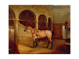 Lord Villiers' Roan Hack in the Stables at Middleton Park, 1834 Giclee Print by John E. Ferneley