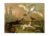 Swan Being Chased by Three Dogs, 1668 Giclee Print by Abraham Danielsz. Hondius