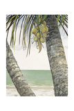 Seaside Coconuts Giclee Print by Arnie Fisk