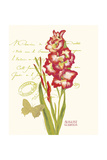August Gladiolus Prints by Ariane Sarah