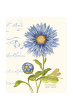 September Blue Aster Posters by Ariane Sarah