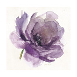 Watery Plum Bloom 1 Giclee Print by Sandra Smith