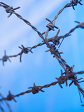 Barbed Wire Sticks Out Against Blue Sky Photographic Print by David H. Wells