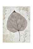Silver and Balsam Reproduction procédé giclée par Ariane Morey