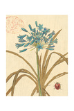 Agapanthus Curiosity Giclee Print by Chad Barrett