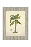 Banana Palm Illustration Giclee Print by Arnie Fisk