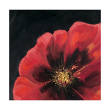 Sparkling Poppy 1 Prints by  DB Studios