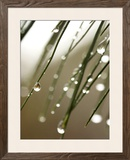Rain Drops on Pine Branch Needles Framed Photographic Print by Ellen Kamp