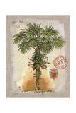 Linen Fan Palm Tree Kunstdrucke von Chad Barrett
