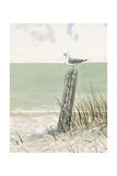 Seaside Perch Kunstdrucke von Arnie Fisk