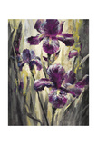 Ambient Iris 2 Giclee Print by Brent Heighton
