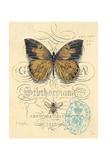 Honeybee Papillon Plakater af Chad Barrett