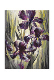 Ambient Iris 1 Giclee Print by Brent Heighton
