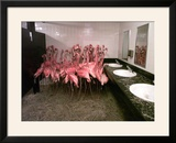 Caribbean Flamingos from Miami's Metrozoo Crowd into the Men's Bathroom Framed Photographic Print