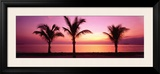 Miami Beach, Florida, USA Framed Photographic Print by  Panoramic Images