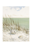 Seaside Bluff   Prints by Arnie Fisk