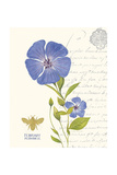 February Periwinkle Giclee Print by Ariane Sarah