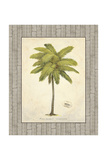 Coconut Palm Illustration Giclee Print by Arnie Fisk