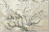 Almond Branches in Bloom, San Remy, c.1890 (tan) Canvas Print by Vincent van Gogh