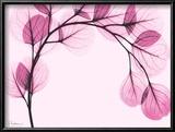 Pink Eucalyptus Poster von Albert Koetsier