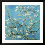 Rami di mandorlo in fiore, San Remy, 1890 circa Poster di Vincent van Gogh