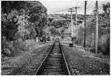 Train Tracks Oyster Bay New York B/W Posters