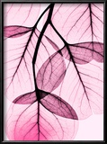 Pink Eucalyptus Prints by Albert Koetsier