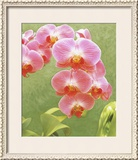 Non-embellished Island Orchid IV Framed Giclee Print by Chariklia Zarris