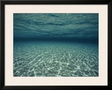 Underwater View Framed Photographic Print by Bill Curtsinger