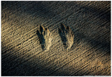 Bird Footprints in the Sand Prints