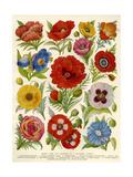 1920s UK Flowers Magazine Plate Reproduction procédé giclée