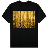 Aspen Trees in Autumn T-Shirt