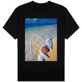 Scallop Shell in the Surf Shirts
