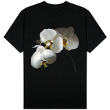 White Phalaenopsis Orchids T-Shirt