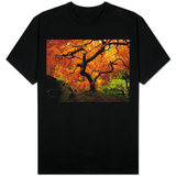 Maple Tree in Autumn T-shirts