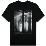 Sunshine in Redwood Forest T-shirts