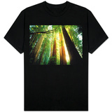 Redwood Forest T-shirts