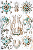 Narcomedusae Nature by Ernst Haeckel Prints