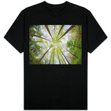 View Towards Sky in Forest Shirts